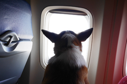 How to Travel with Pets in Aeromexico Cabin