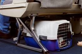 Alaska Airlines Pets in the Cabin Requirement