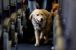 Allegiant Air Pet Policy, Pet Reservations Rules