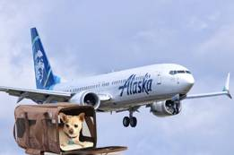 Pet Carrier Size in Alaska Airlines