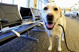 What is the Pet Policy of United Airlines?