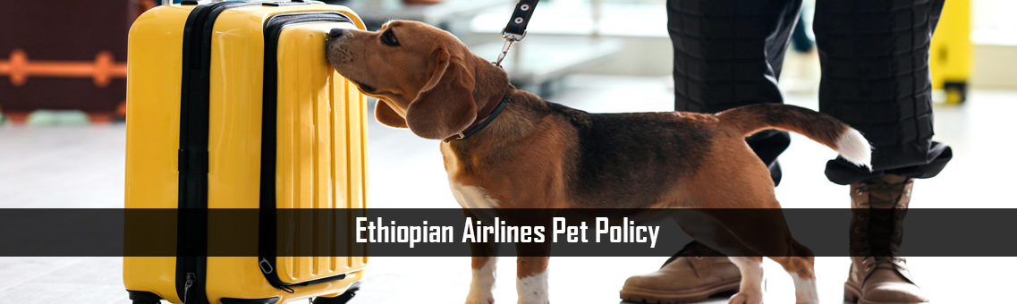 Inspection of Ethiopian Airlines Pet Policy: